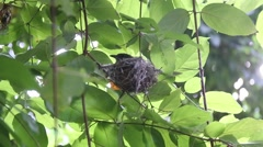 Bird in nest on tree Stock Footage