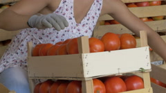 Girl arranging tomatoes, farmer take the crates and leaving, tilt up by Cutter. Stock Footage