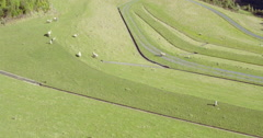 Aerial of sheep grazing on grass in farm on a dam , Auckland, New Zealand Stock Footage