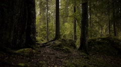 Finnish Forest With Silhouetted Trees Stock Footage