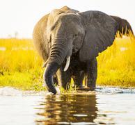 Elephant With Water Spray Stock Photos