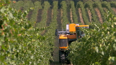 CALVIGNANO, PV, ITALY - SEPTEMBER 5: A mechanical vine harvester picks grapes. Stock Footage