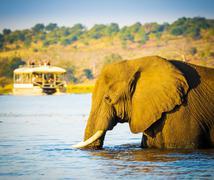 Tourists On Elephant Safari Africa Stock Photos