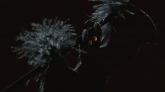 Soft focus textile bat halloween decoration moving in the wind Stock Footage