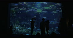 People visiting oceanarium Stock Footage