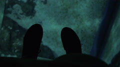 Sea animal swimming under glass floor in oceanarium Stock Footage