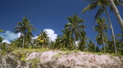 Moving from sand to palm trees Stock Footage