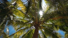 Lush palm trees with coconuts from low angle, sun flare Stock Footage