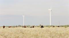 Cow grazing near wind farms Stock Footage