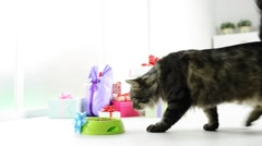 A gift for your cat Stock Footage