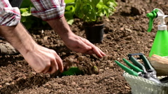 Farmer planting plants in the garden Stock Footage