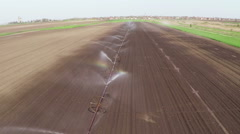 Irrigation of young paprika field in spring. Aerial footage. Stock Footage