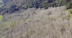 Aerial of farm land and trees near leigh, northland, auckland Stock Footage