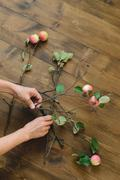 Basis for a bouquet of apple branches Stock Photos