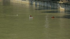 Plastic Bottles Floating In City River Stock Footage
