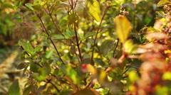 Basil Leaf Stock Footage