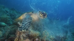 Sea Turtle eating soft corals Red Sea Stock Footage