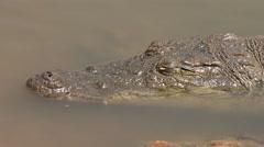 Nile crocodile head close up - Africa Stock Footage