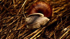 Forest snail in the grass Stock Footage