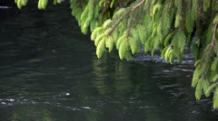 Branch spruce and river water in the forest,slow motion Stock Footage
