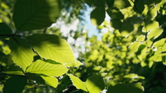 Sunlight brightening portion of leaf on tree. RAW video record Stock Footage