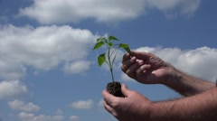 Farmer Analyze a Small Plant Used in a Modern Farmland in Organic Agriculture. Stock Footage