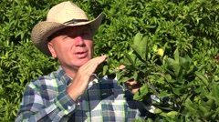 Farm Owner Presenting and Recommend Agriculture Business with citrus Culture. Stock Footage
