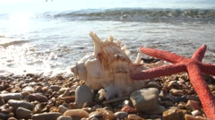 Starfish and shells on the sea shore into the waves Stock Footage