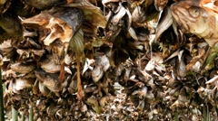 Stockfish racks with fish heads Stock Footage