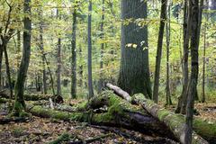 Broken trees almost declined Stock Photos