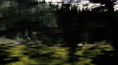 4K UHD Driving Through Thick Forrest Stock Footage