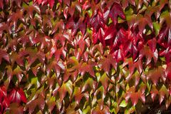 Autumn leaf Background Stock Photos