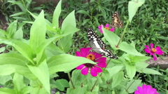 Slow motion butterfly on pink flower in tropical garden Stock Footage