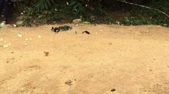 Slow motion butterflies eating food on salt earth Stock Footage