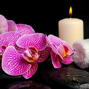 Spa setting of twig stripped violet orchid (phalaenopsis ), zen stones with d Stock Photos