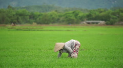 Close-up view where asian woman in national straw triangular hat reaps a crop Stock Footage