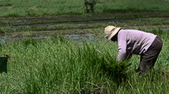 Man cutting grass in a field Stock Footage