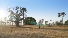 Heat African savanna landscape at sunset - children in the background Stock Footage
