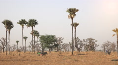 Heat African savanna landscape - local people in the background Stock Footage