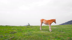 Wild horse on the hill in a windy day Stock Footage