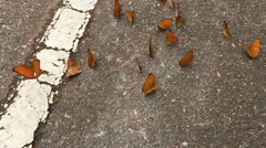 Slow motion butterflies on the side street Stock Footage