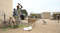 Poor African village with a black woman - Wolof ethnic group, Senegal Stock Footage