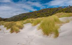 Dune Vegetation Wharariki Beach Stock Photos