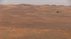 Pronghorn antelope being herded by helicopter. Stock Footage