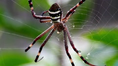Spider moves across it's web in the morning light. Stock Footage