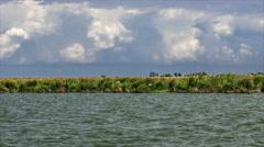 Wetlands in the Kizilirmak delta Black Sea Province of Turkey Stock Footage