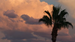 Sunset colored clouds behind palm tree time lapse Stock Footage