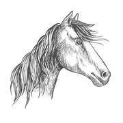 Horse with mane. Mustang stallion sketch portrait Stock Illustration