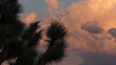 Sunset colored clouds behind joshua tree time lapse Stock Footage