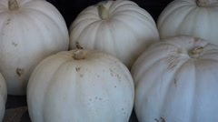 White pumpkins pumpkin  halloween Arkistovideo